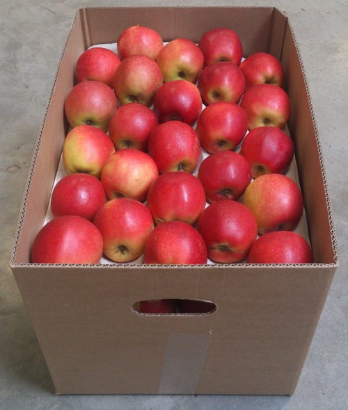 کارتن سیب
